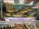 Frischer Fisch.