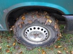 Zum Glück ist Mr. turtle damit nicht stecken geblieben.