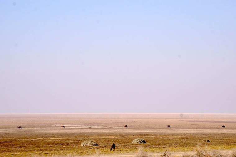 Iran Wüste Maranjab Dasht-e Kavir Dromedare