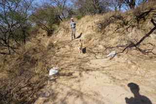 Trail-Hund.