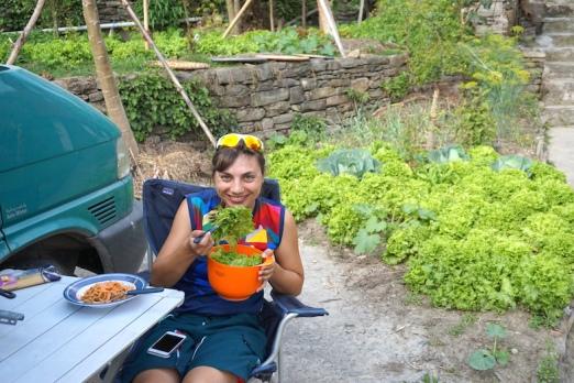 Frischer Salat direkt aus dem Garten.