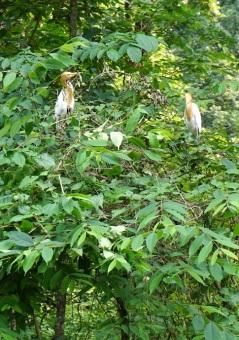 Vögel am Straßenrand.