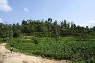Fahrt durch grüne Felder.