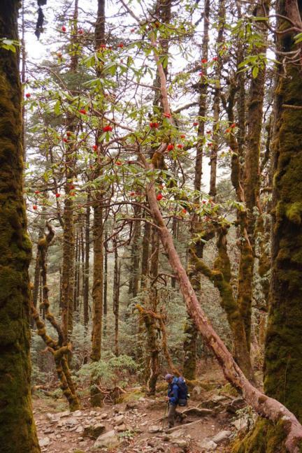 Abstieg durch den Wald.