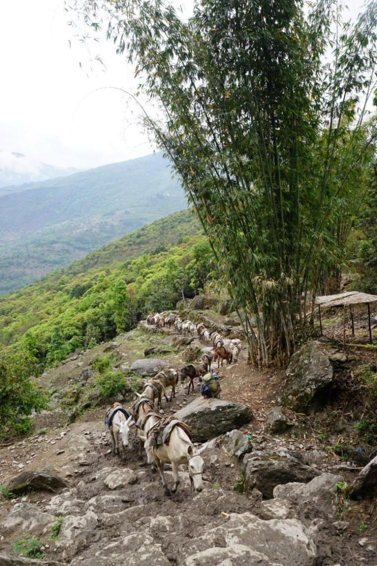 Die nächste große Malutierkarawane auf dem Weg in die Berge.