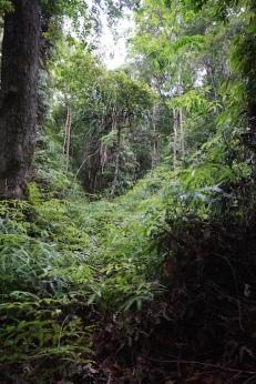 und dichter Dschungel.