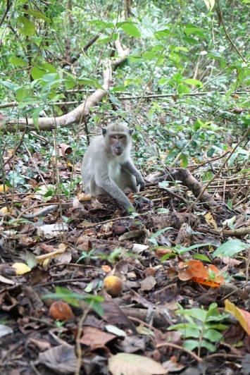 Ein Affe am Wegesrand.