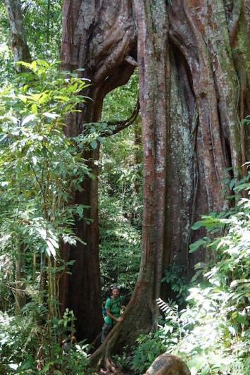 Im Dschungel.