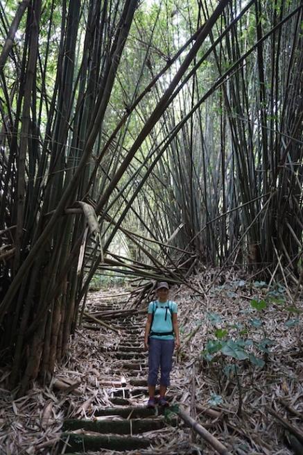 Riesen-Bambus.