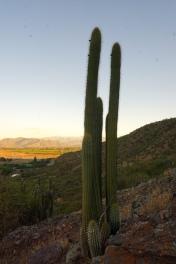 Kaktus I.