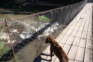 Blick von der Hängebrücke.