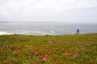 Küstenwiese.