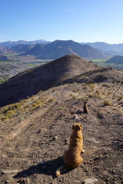 Die Hunde genießen die Aussicht.