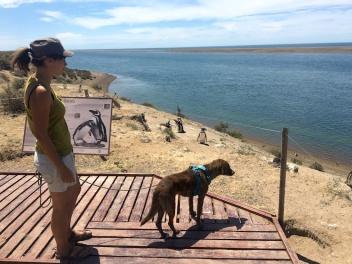 Mila und die Pinguine.